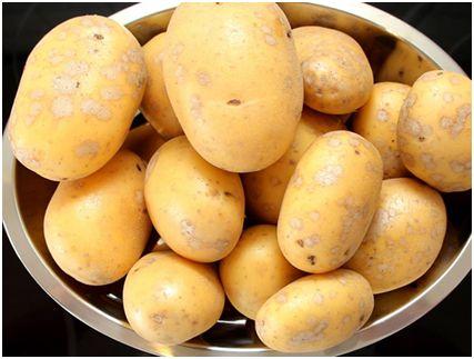 Эх, картошечка!